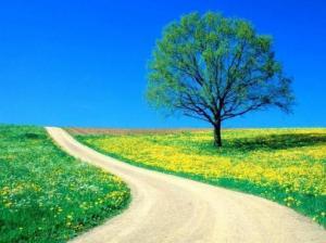 un_sendero_en_la_primavera-93811.jpg