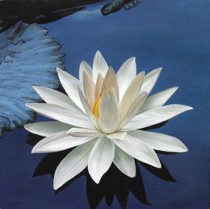 osho-frases-flor-loto-blanco[1]